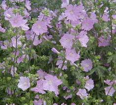 Malva Leaf Flower C/S - Product Image
